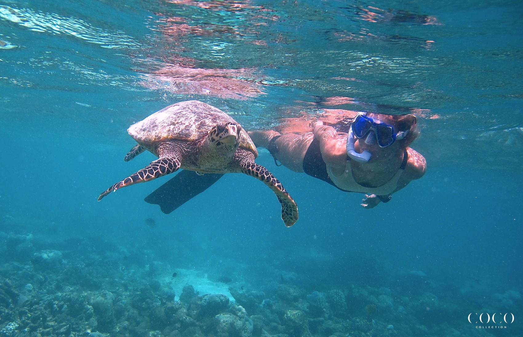 Turtles, Manta Rays and Sharks! We have it all at Coco Bodu Hithi