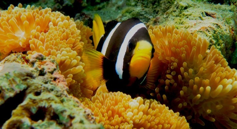 YOUR MARINE BIOLOGISTS FAVOURITE FISH - PART 7