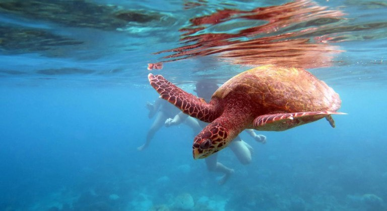 The Olive Ridley Project attends the 36th International Sea Turtle Symposium (ISTS)