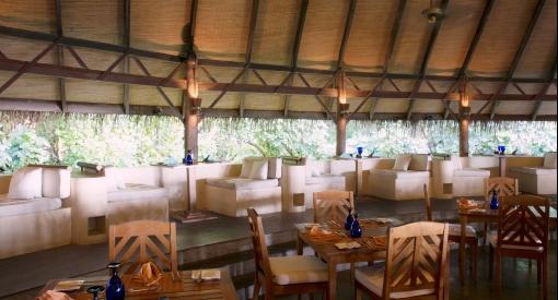 Coco palm dhuni kolhu cowerie4143